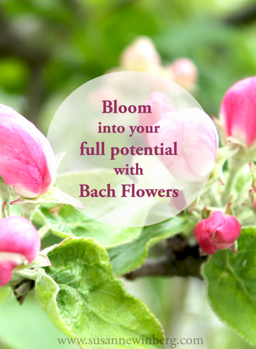 Bloom into your full potential with Bach Flowers.
