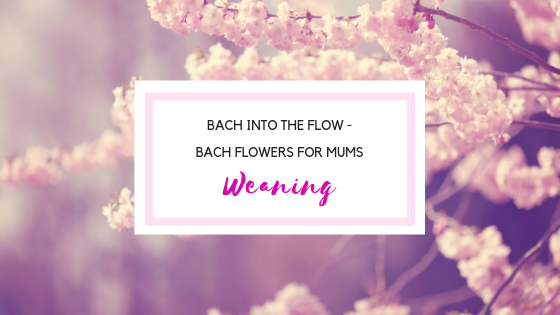 Bach Flowers for mothers - weaning