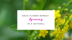 Agrimony: Bach Flower Portrait for Emotional Healing